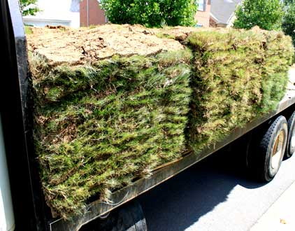Bermuda-Sod-on-truck-on-pallets