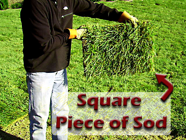 Square piece of sod squarepieceofsod